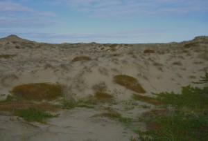 90 Mile Beach 069