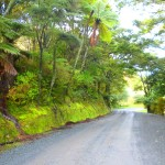 Farm road near Mimiwhangata. The photo does not do justice to the shade of green.