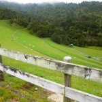 Wairoa Dam face. Sheep like it