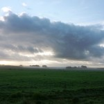 Waikato farm, early morning