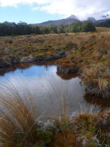 Alpine bog pond